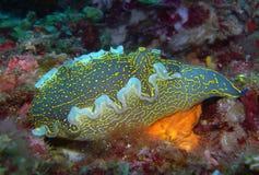 Vida de mar de Aegian fotografia de stock royalty free