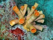 Vida de mar no recife coral Imagens de Stock Royalty Free