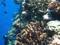 Vida de marina Fotografía de archivo libre de regalías