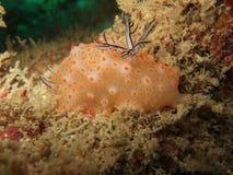 Vida de marina Fotos de archivo