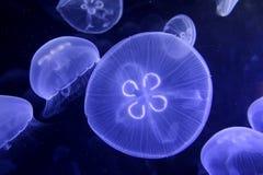 Vida de marina Imagenes de archivo