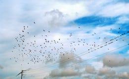 Vida de pájaros salvajes Fotografía de archivo