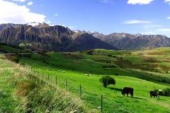 Vida de país Nova Zelândia (2) Foto de Stock Royalty Free