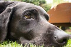 Vida de um cão Imagens de Stock