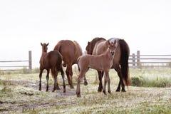 Vida de um cavalo pequeno Fotos de Stock Royalty Free
