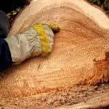 Vida de uma árvore fotos de stock royalty free