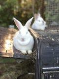 Vida de un conejo Fotografía de archivo libre de regalías