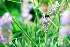Vida de una abeja Imagen de archivo