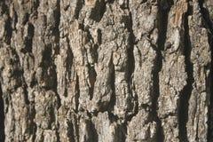 Vida del árbol Fotografía de archivo libre de regalías