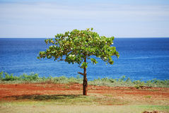 Vida del árbol Imagenes de archivo