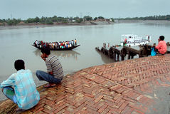 Vida del agua de Sundarban Imagen de archivo