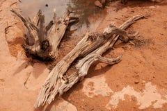 Vida del agua y todavía de madera Imágenes de archivo libres de regalías