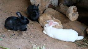 Vida del conejo, hábitat de la naturaleza animal almacen de metraje de vídeo