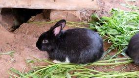 Vida del conejo, hábitat de la naturaleza animal metrajes
