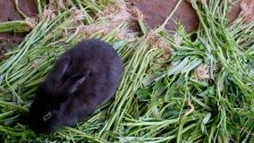 Vida del conejo, hábitat de la naturaleza animal almacen de video
