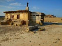 Vida del desierto Imagen de archivo libre de regalías