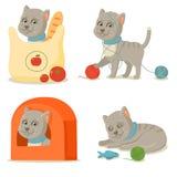 Vida del gato Aventuras grises lindas del gato Imágenes de archivo libres de regalías