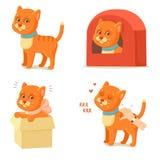 Vida del gato Aventuras rojas lindas del gato Fotos de archivo libres de regalías