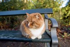 Vida del gato en el jardín de Frederiksberg, Copenhague, Dinamarca fotografía de archivo