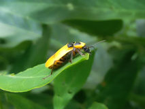 Vida del insecto imagen de archivo libre de regalías