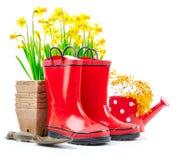Vida del narciso de la flor de la primavera que cultiva un huerto aún Foto de archivo libre de regalías