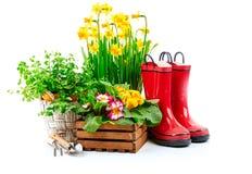 Vida del narciso de la flor de la primavera que cultiva un huerto aún Imagen de archivo libre de regalías