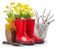 Vida del narciso de la flor de la primavera que cultiva un huerto aún con rojo Fotos de archivo