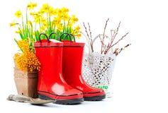 Vida del narciso de la flor de la primavera que cultiva un huerto aún con rojo Foto de archivo libre de regalías