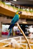 Vida del pájaro del Macaw Fotos de archivo libres de regalías