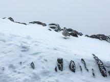 Vida del pájaro en montañas frías de País de Gales imágenes de archivo libres de regalías