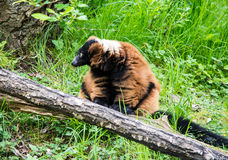 Vida del parque zoológico Imagen de archivo