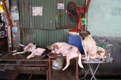Vida del perro Imágenes de archivo libres de regalías