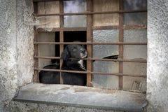 Vida del perro detrás de parrillas del hierro foto de archivo