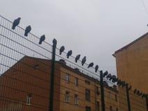 Vida del planeta de menor importancia del cielo del tejado de la paloma del pájaro de la ciudad de la arquitectura Fotos de archivo libres de regalías