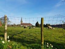 Vida del pueblo en la primavera - iglesia, oveja y corderos Imagenes de archivo