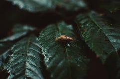 Vida del ` s del insecto Imagenes de archivo