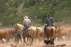 Vida del vaquero Imágenes de archivo libres de regalías