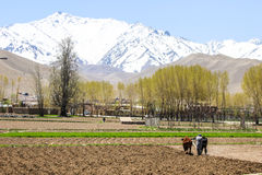 Vida diaria del campo en Bamyan fotografía de archivo