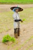 Vida diaria en Indonesia, trabajadores del arroz Imágenes de archivo libres de regalías