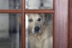 Vida do cão Imagem de Stock Royalty Free