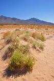 Vida do deserto Fotografia de Stock Royalty Free