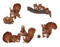 Vida do esquilo Foto de Stock