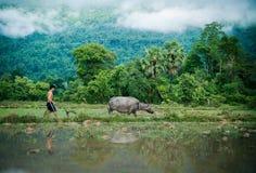 A vida do Lao Imagem de Stock