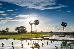 A vida do Lao Foto de Stock