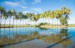 A vida do Lao Fotografia de Stock Royalty Free