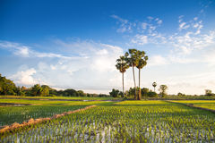 A vida do Lao Imagens de Stock
