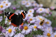 A vida do mundo, da borboleta e da abelha Imagens de Stock