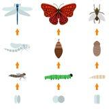 Vida do nascimento do inseto ilustração royalty free