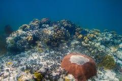 Vida do oceano no recife Fotografia de Stock Royalty Free