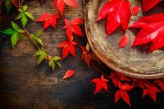 Vida do outono ou da queda ainda Fotografia de Stock Royalty Free